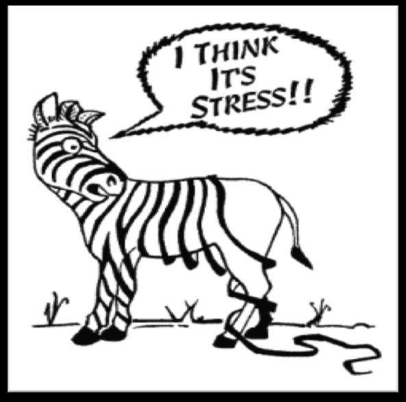 Mindfulness-Based Stress Reduction™ Class